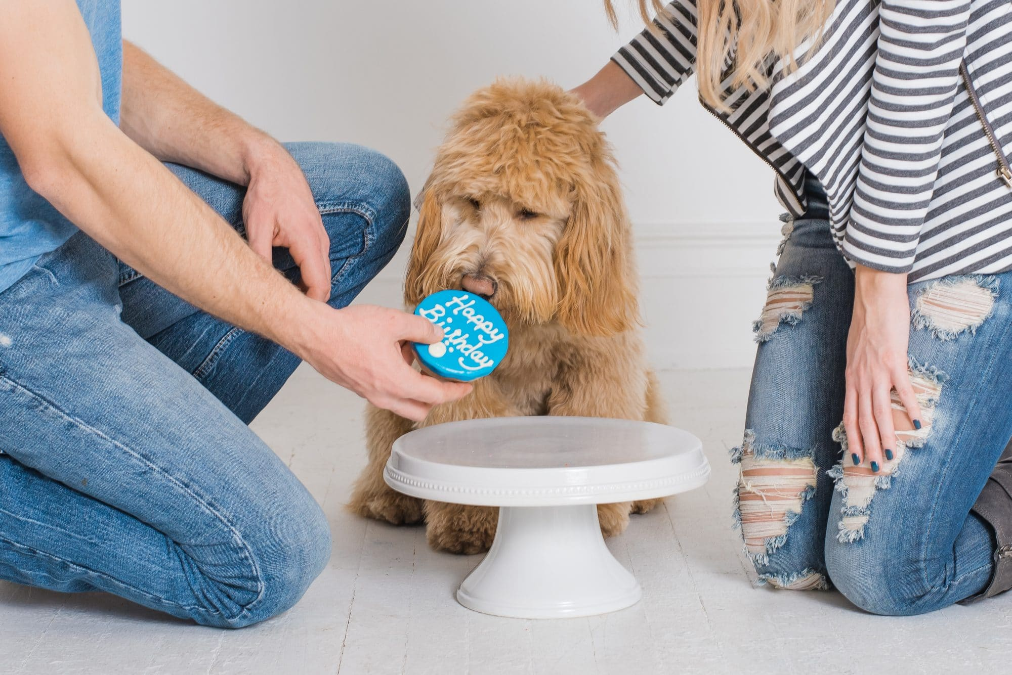 Dog First Birthday Photos | Dog Photo Session | Lafayette Indiana Photographer | Lafayette Indiana Dog Photographer | Luminant Photography | Victoria Rayburn
