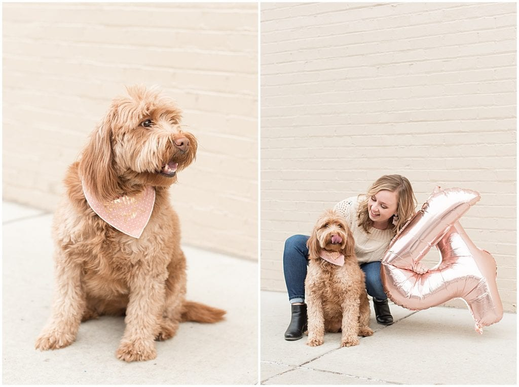 Hattie Rayburn, Victoria Rayburn's goldendoodle, in downtown Lafayette, Indiana