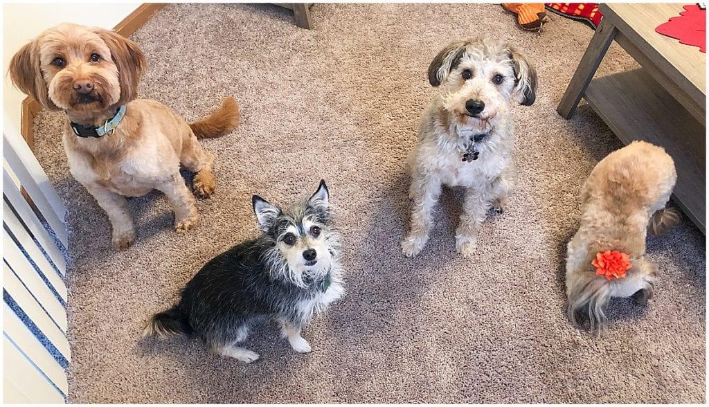 Hattie Rayburn with dog friends