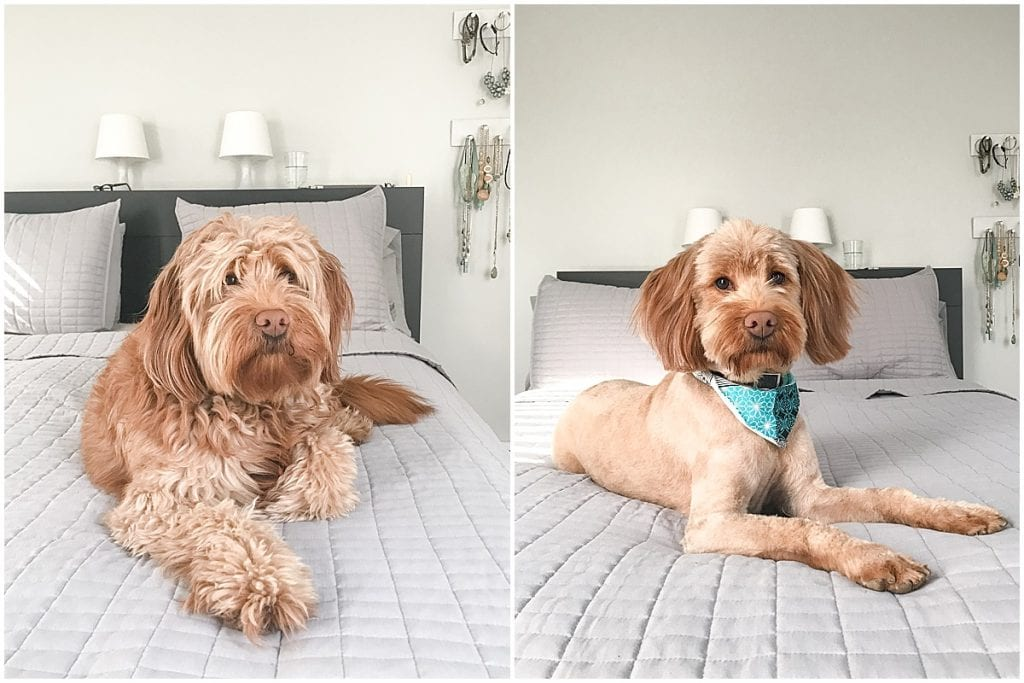 Hattie Rayburn before and after haircut at Simon and Halle's in Lafayette, Indiana