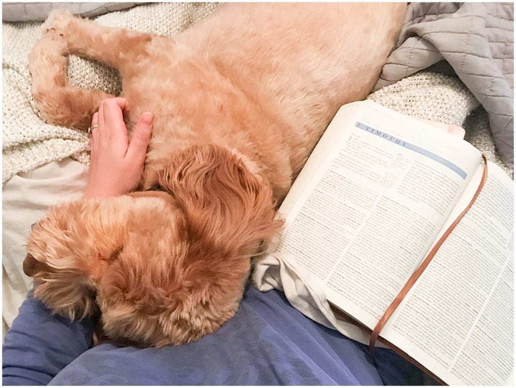 Goldendoodle Hattie Rayburn sleeping by Bible